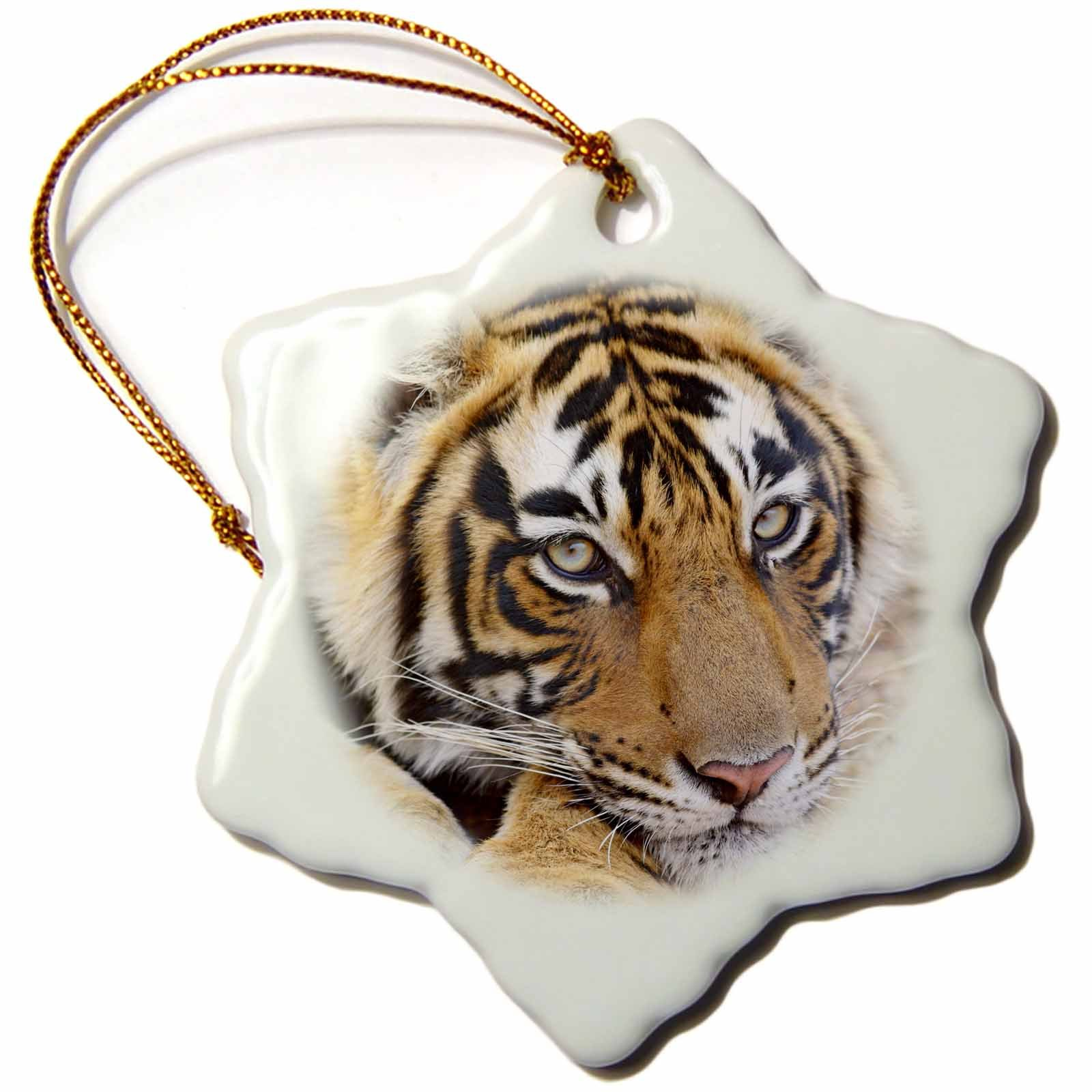 3dRose Royal Bengal Tiger, Ranthambhor National Park, India Snowflake Ornament, 3'' by 3dRose (Image #1)