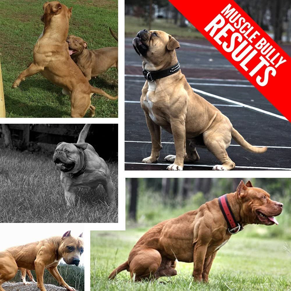Muscle Bully Vita Bully Supplement for Bully Breeds: Pit Bulls, American Bullies, Exotic Bullies, Bulldogs, Pocket Bullies (60 Tablets) by