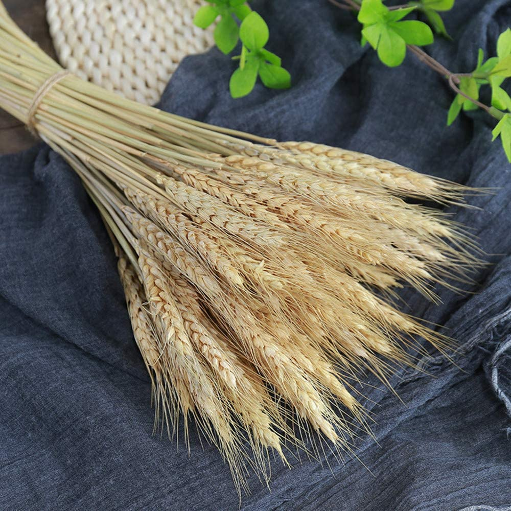 XIZHI 100 Stems Natural Dried Wheat Sheaves,Artificial Flower Artificial Plant Large Wheat Dried Flowers,Dried Wheat Stalks,for DIY Home Table Wedding Xmas Decor -17 inches(Natural)