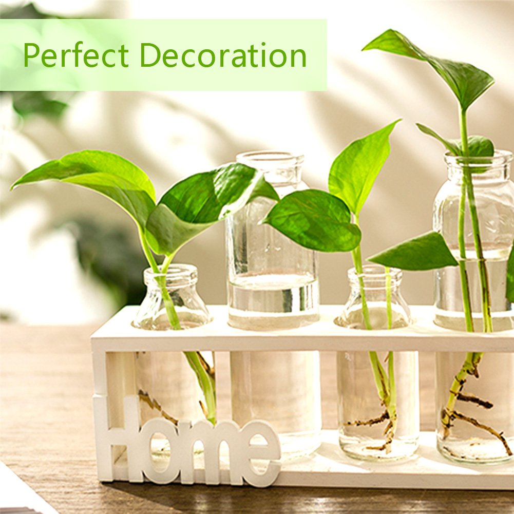 HaloVa Terrarium, Creative Fashion Plant Terrarium, Modern Decorative Clear Glass Planter Hydroponics Terrarium with Wooden Stand for Home Office and Centerpieces Decor, Raw Wood, 2 Terrarium by HaloVa (Image #2)