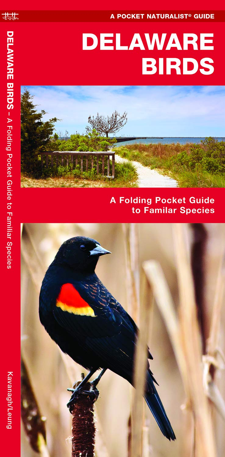 Delaware Birds: A Folding Pocket Guide to Familiar Species (Pocket  Naturalist Guides): James Kavanagh, Waterford Press, Raymond Leung:  9781583552223: ...