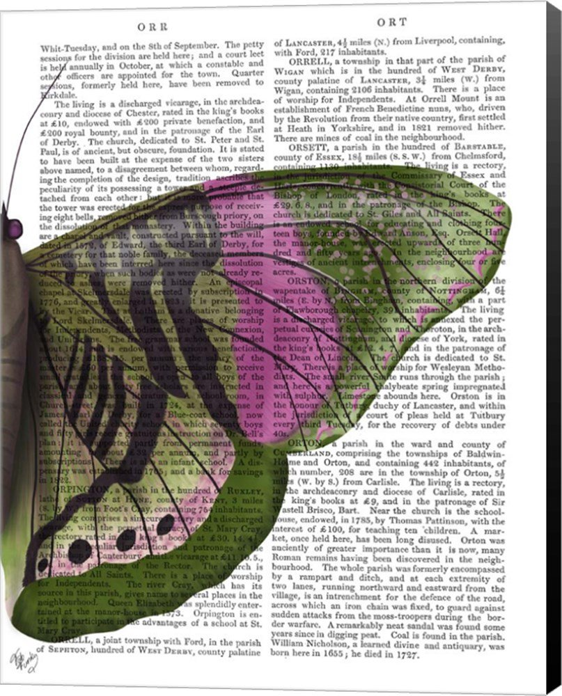 Amazon.com: Butterfly in Green and Pink b by Fab Funky Canvas Art Wall Picture, Museum Wrapped with Black Sides, 22 x 28 inches: Posters & Prints