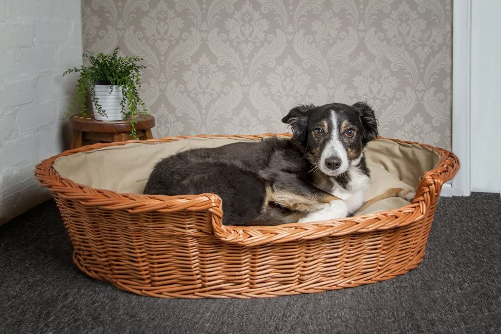 Dog in rattan dog bed