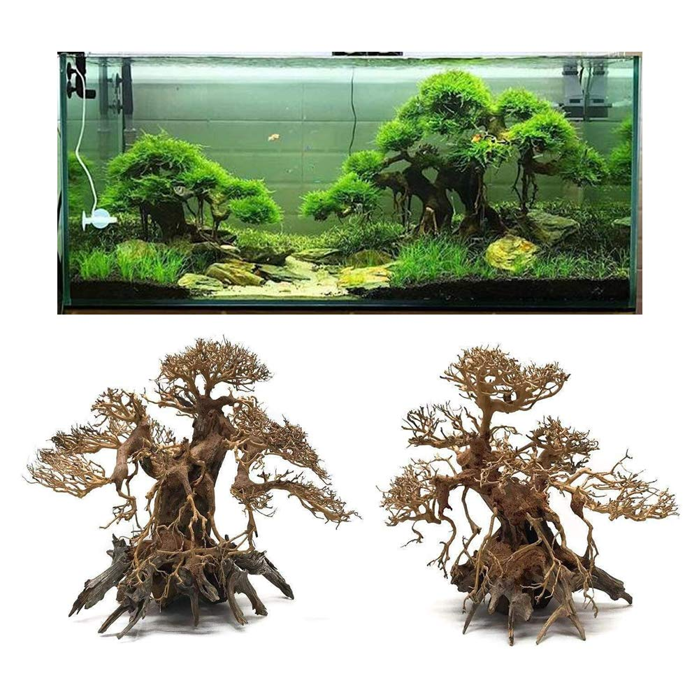 Sagar Aquarium Driftwood Banyan Tree Shape Wood Bonsai Tree For Fish Aquarium Planted Aquascape Freshwater 11 Inch Height Upto 30 X 30 X 15 Cm Amazon In Pet Supplies