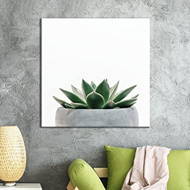 wall26 - Square Canvas Wall Art - Green Succulent Plant in The Pot with White Background - Giclee Print Gallery Wrap Modern Home Decor Ready to Hang - 24x24 inches