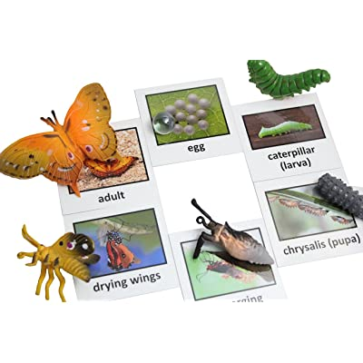 Curious Minds Busy Bags Montessori Butterfly Life Cycle Animal Match Cards and Figurines. Nomenclature Science Work Teaching: Toys & Games