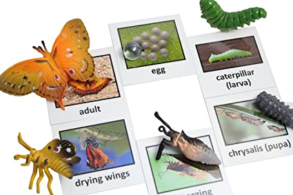 Nomenclature Science Work Continent Box Curious Minds Busy Bags Montessori Australian Animal Match Cards and Figurines
