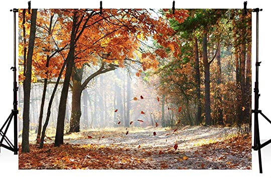 Amazon Com Mehofoto Gold Autumn Scene Forest Trees Photo Studio Booth Backdrops Maple Leaves Tree Fall Scenery Photography Backgrounds 7x5ft Camera Photo