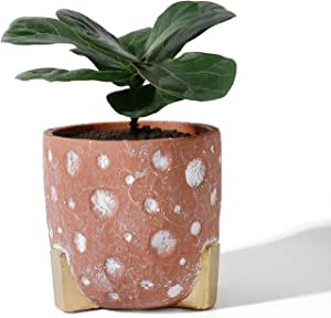 Potey 051902 Cement Planter Pot 5 5 Inch Red Concrete Planters Bonsai Container With Golden Leg White Circle Detailing Drainage Hole For Plants Flower Aloe Plant Not Included Ded Garden Outdoor Amazon Com