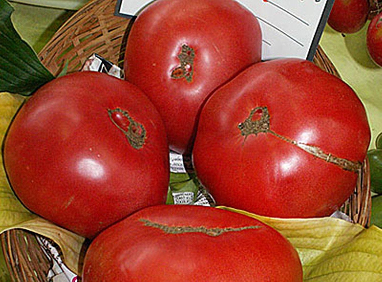 レアピンクトマト種子Boyarynya F1 - ボヤーロシアNON-GMOハイブリッド B00XJ5QY9Y