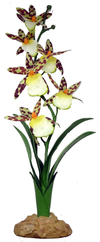 KOMODO Orchidée araignée 40 cm 82512