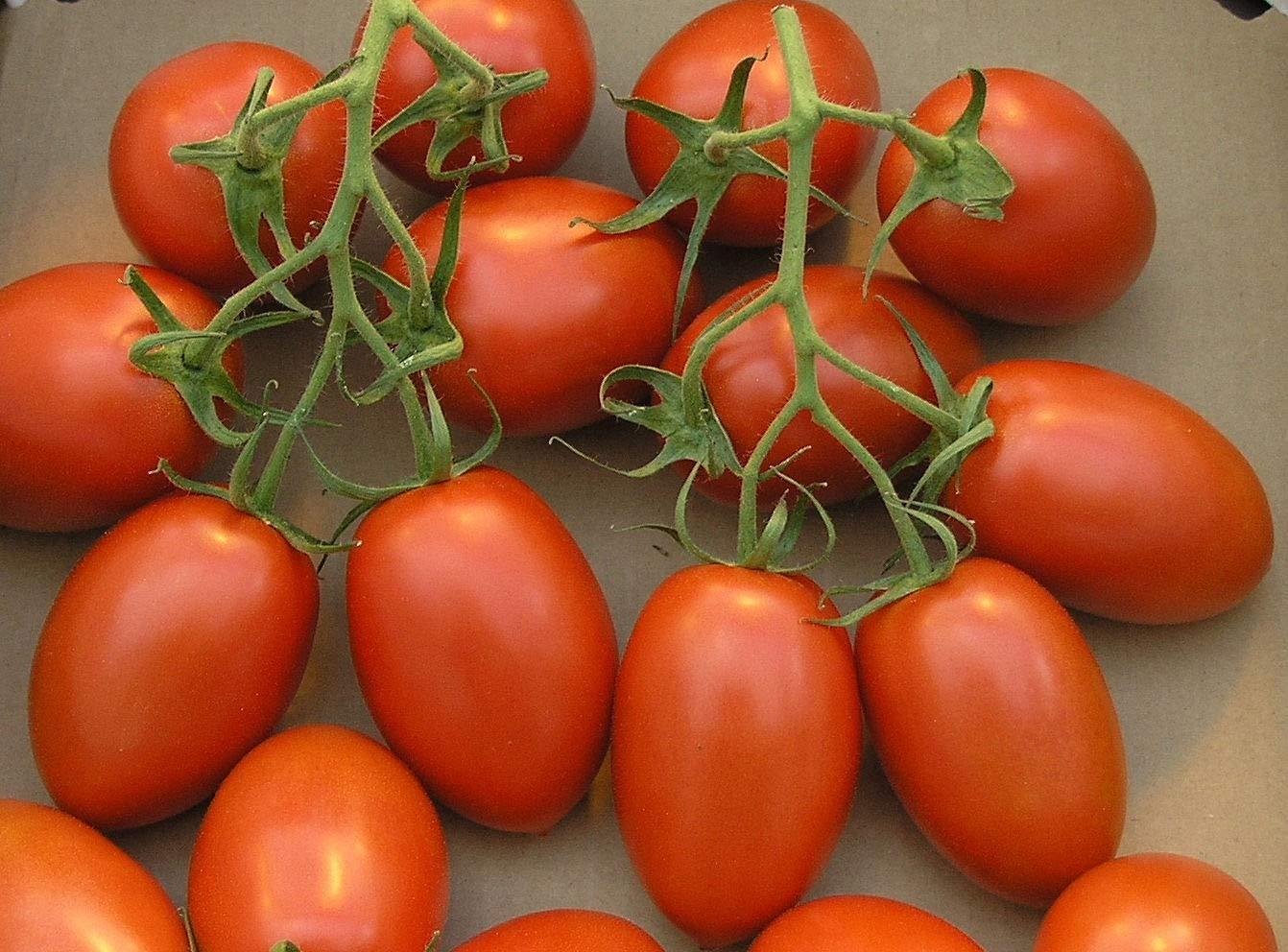 Cherry Roma Tomato Seed
