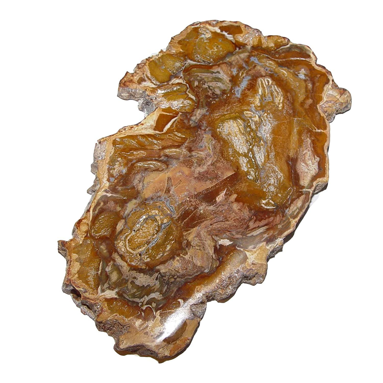 150 Millionen Jahre alt. 4683 100-120 mm ca Baumscheibe versteinerte Holz Scheibe aus Madagaskar ca