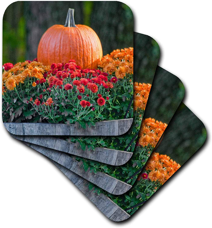 3dRose TDSwhite – Fall Seasonal Nature Photos - Fall Harvest Scene Autumn Flowers Mums Perfect Pumpkin - set of 8 Coasters - Soft (cst_321844_2)