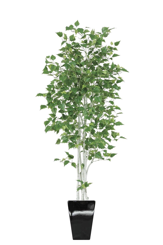 白樺(シラカバ) 190cm 黒鉢 (kwsk-TP-1802-18) フェイクグリーン ギフトラッピング、お祝札対応可 B073B47DXY