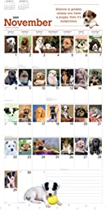 "Goldistock 2020 Large Wall Calendar -""I Love Puppies 366 Days"" - 12"" x 24"" (Open) - Thick & Sturdy Paper - - Playful Puppies -366 Unique Images"