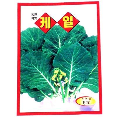Kale Seeds Korean 2pack : Kale Plants : Garden & Outdoor