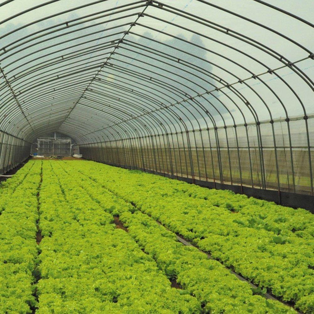 ビニール フィルム 温室フィルム EVAフィルム(0.1mm) 4m×50m 1巻 被服資材 農業用フィルム B07DCSQP6K