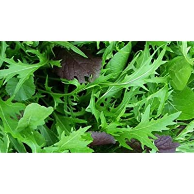 5000 Mizuna Seeds ~ Japanese Salad Greens ~ Exotic Garden Vegetable ~ Annual : Garden & Outdoor