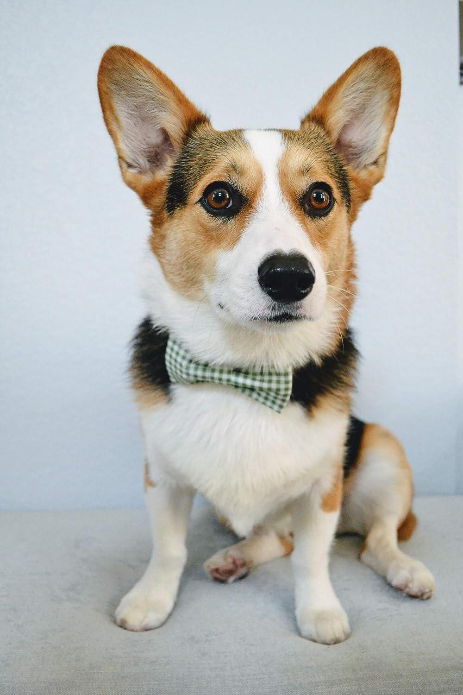 lionet paws Hundehalsband mit Fliege Langlebiges Bequemes Baumwolle Halsband mit Metall Steckverschluss oder Leine f/ür Hunde und Katzen