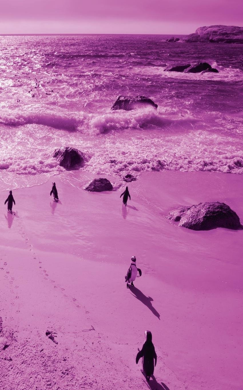 Alive! Little Penguin Friends - Magenta Duotone - Photo Art Notebooks (5 X 8 Series) ePub fb2 book