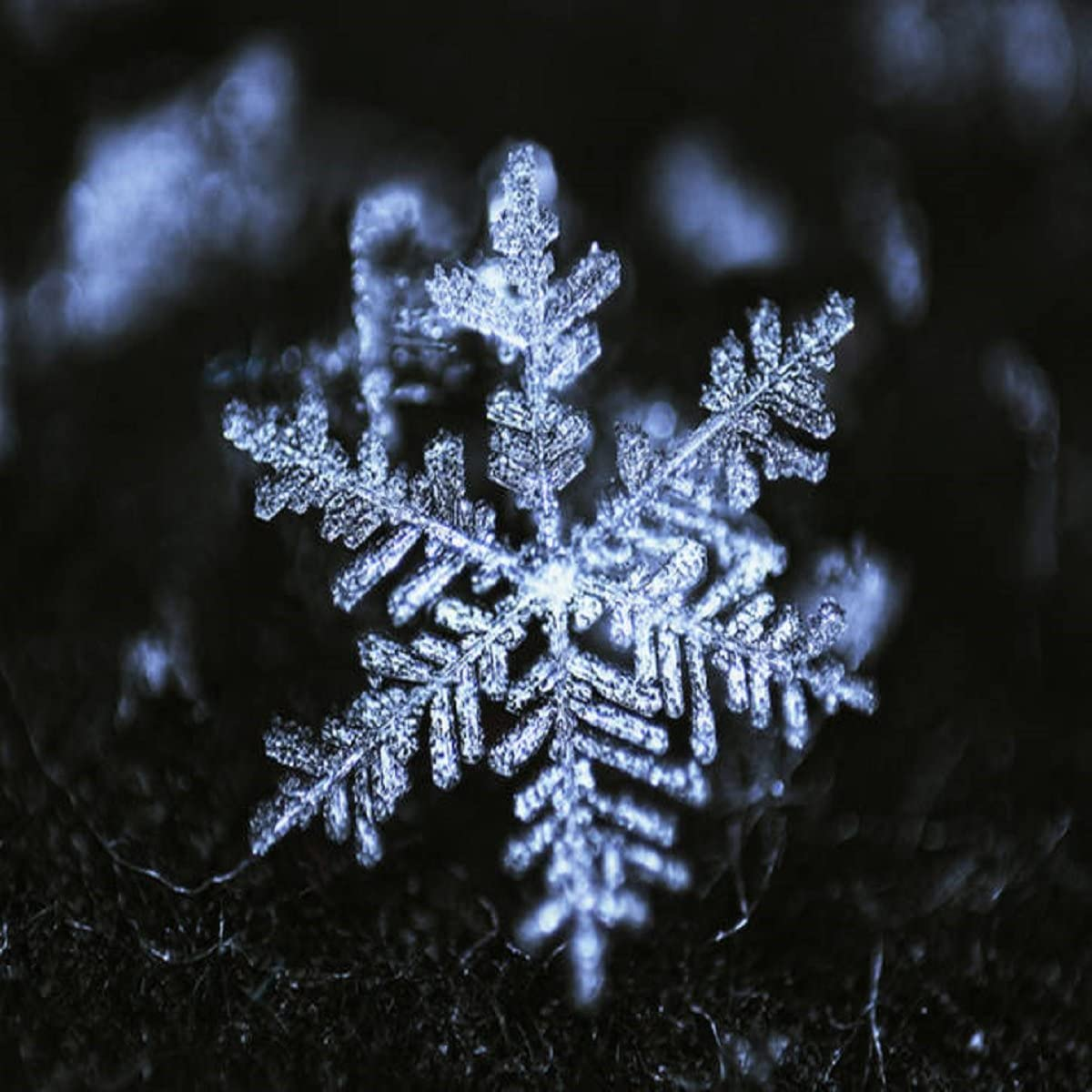 Shimmering Snowflake Fragrance Oil - 16 OZ/ 1 LB - for Candle & SOAP Making by VIRGINIA CANDLE SUPPLY - Free S&H in USA