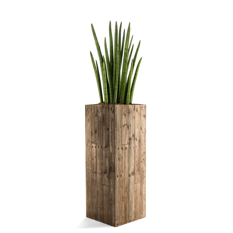 "Pflanzkübel ""Woodline High Cube"" Dark Flame Wood Eckig Hoch Holz ..."