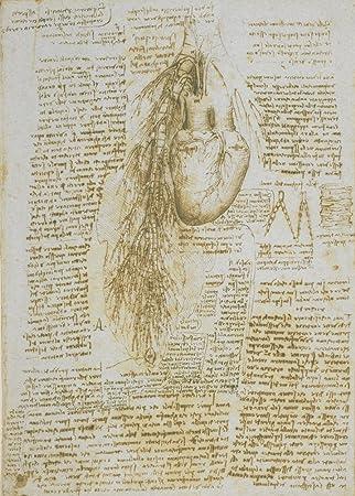 Amazon.de: Vintage Anatomie Studie der Herz und Bronchial Schiffe ...