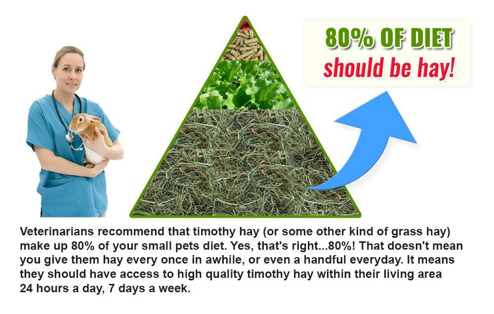 Small Pet Select 3rd Cutting Super Soft Timothy Hay Pet Food, 10 lb.