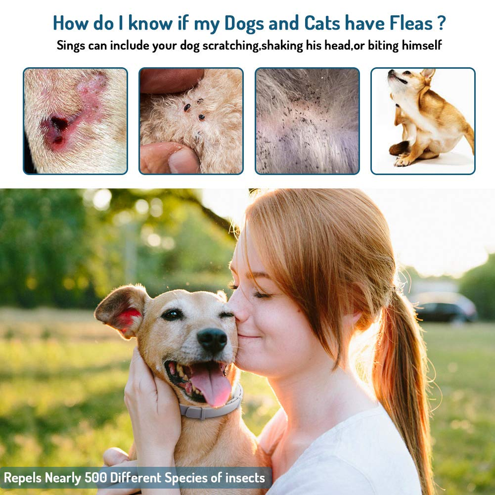 FBA Dog Anti-Flea Necklace 2 Pcs 62cm en una Caja BlueSticker Tin Box