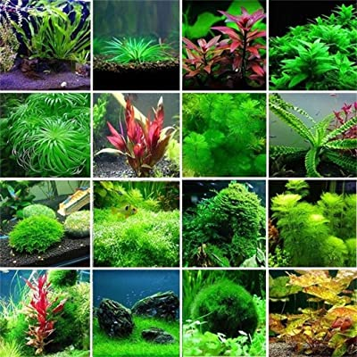 HOTUEEN Aquatic Water Seeds Aquarium Planting Seeds Fish Tank Decoration Grass Seeds : Garden & Outdoor