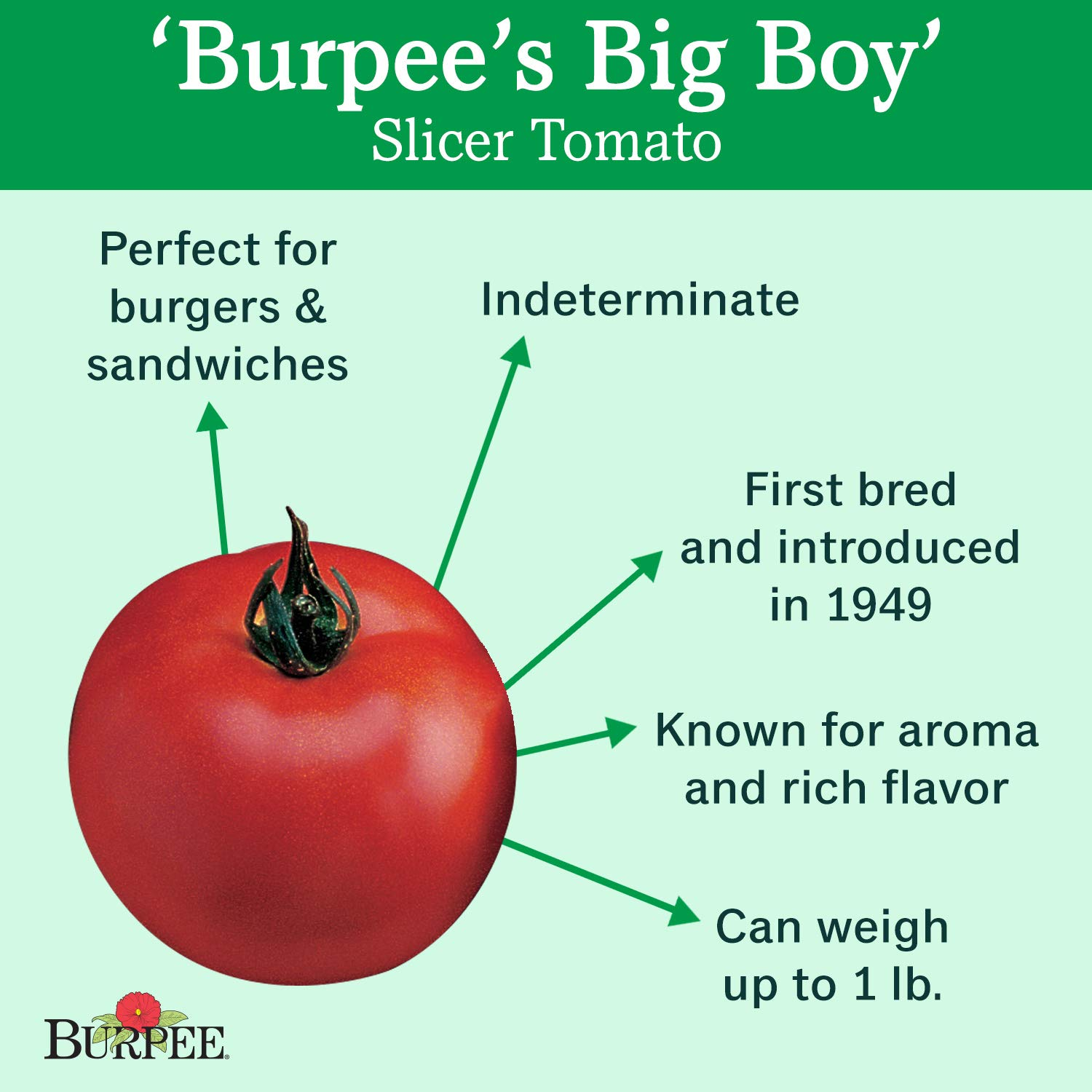 Burpee Big Boy' Hybrid Large Slicing Red Tomato Rich Flavor, 3 Live Plants | 2 1/2'' Pot by Burpee (Image #2)