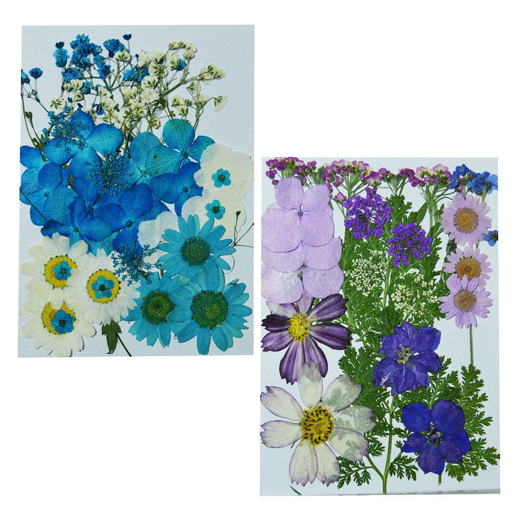 Uokwiwi Real Dried Pressed Flowers Assorted Colorful Daisies Leaves Hydrangeas for Art Craft DIY 1 Pack Size 13