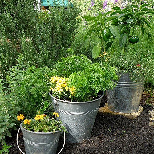 Bonnie Plants Bonnie's Green Bell Pepper Live Vegetable Plants - 4 Pack | Non-GMO | 2 - 3 Ft Plants | 4.5 x 4 Inch Pepper Size by Bonnie Plants (Image #7)