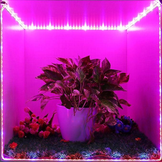 2m SMD 5050 LED Strip Grow Light Lamp Full Spectrum For Plant Vegetable DC 12V