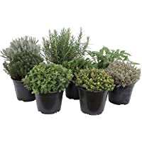 Paquete de hierbas italianas con 5 hierbas/orégano, albahaca, perejil, tomillo, mejorana / 250 semillas/Ideal para el…