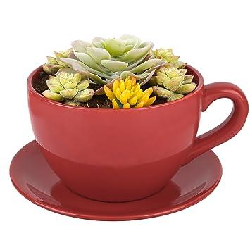 Ardisle Ceramic Tea Cup And Saucer Planter Garden Home Oversized