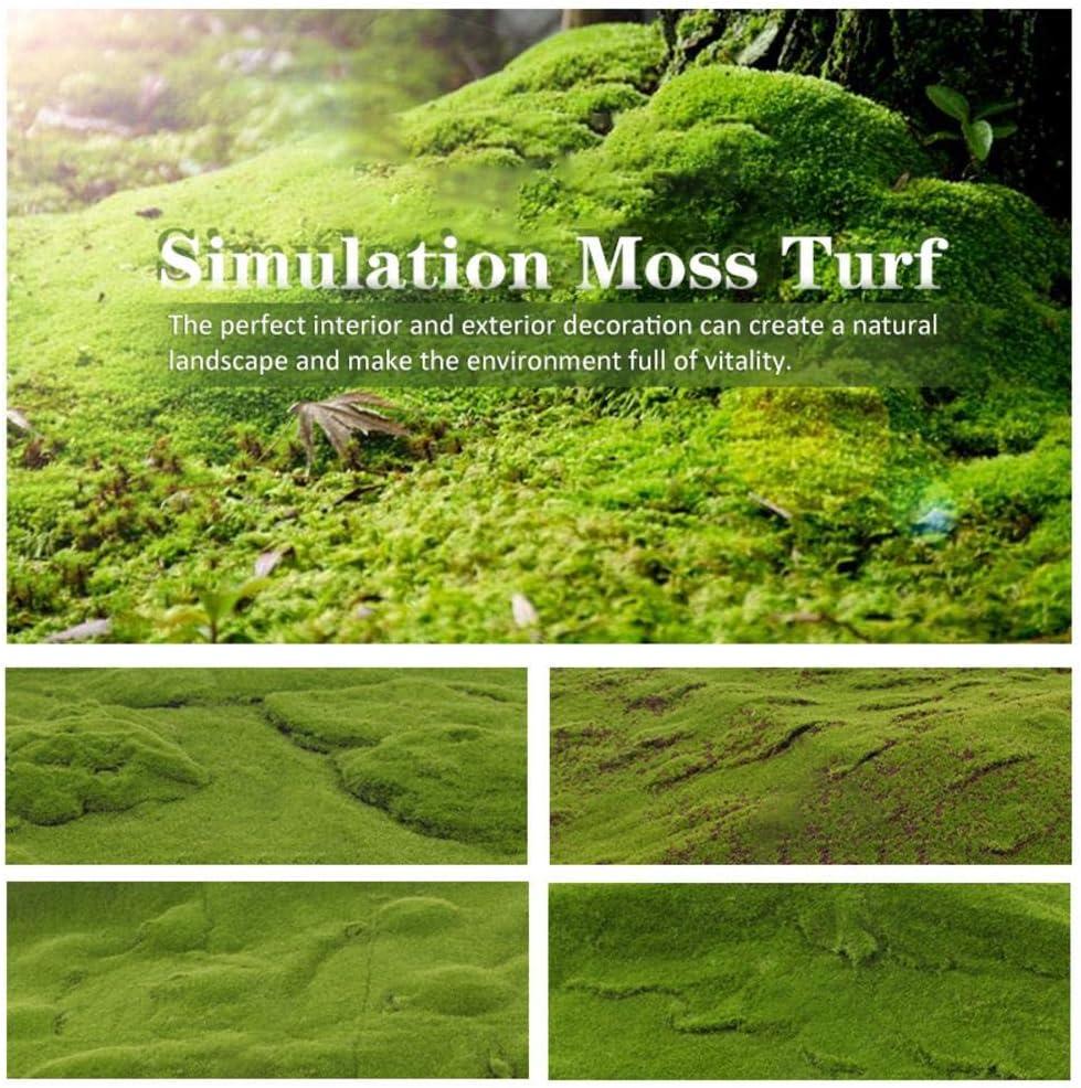Moss Seeds Ground Cover,Moose Lawn Moss Garden C/ésped Artificial Musgo Bonsai Semillas De C/ésped Decorativo Planta Ornamental para El Jard/ín De Su Casa 1 1M