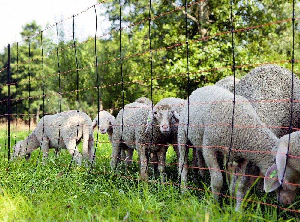 50 m TitanNet Elektro-Schafnetz für unebenes Gelände Höhe 108 cm Wolfabwehrnetz