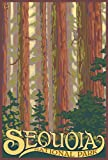 Sequoia National Park - Forest View (9x12 Art Print, Wall Decor Travel Poster)