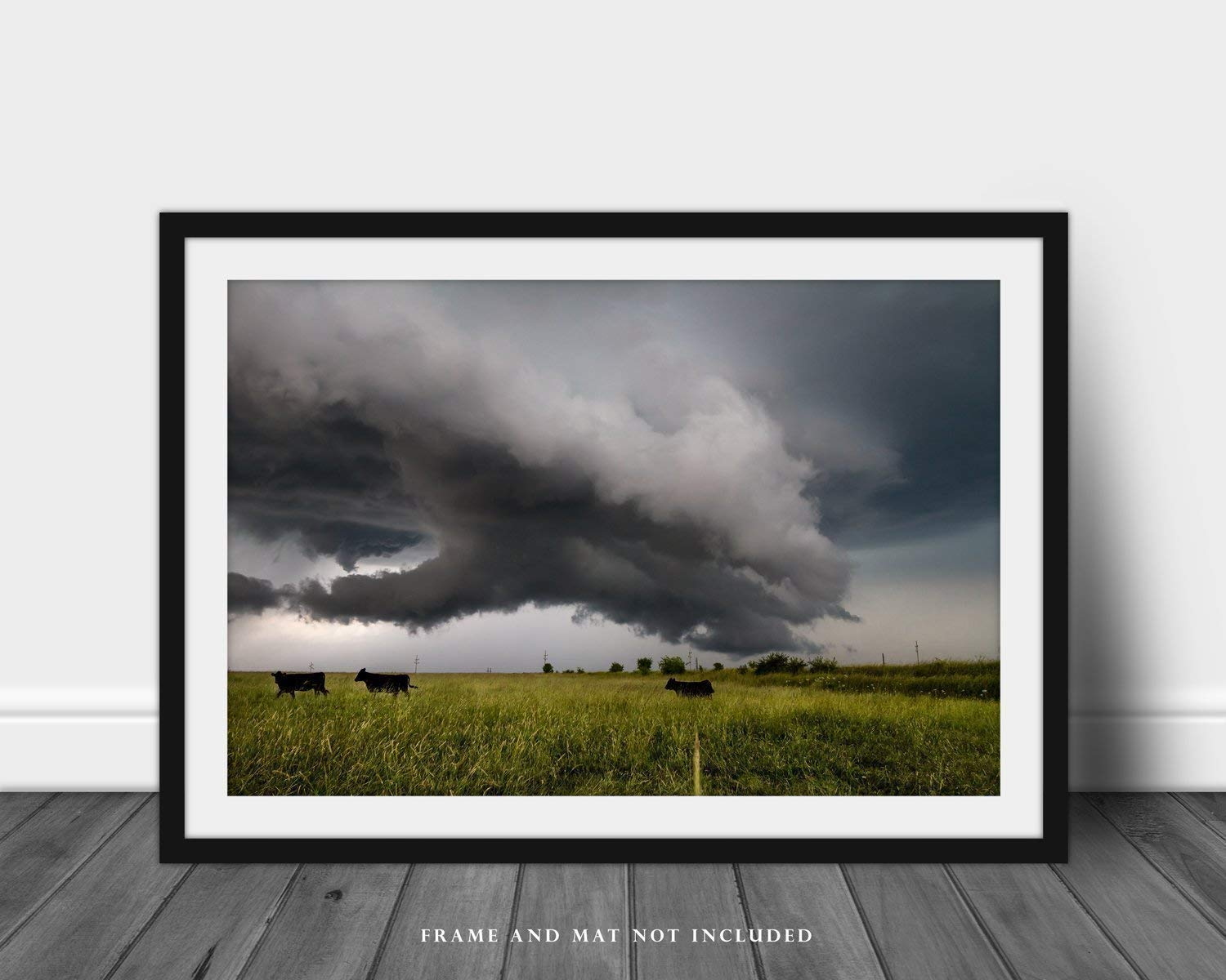 Black Angus Cattle Photography Print Picture of Cattle Moving Away from Thunderstorm Western Farm and Ranch Cow Wall Art Decor for Home Decoration 5x7 to 30x45