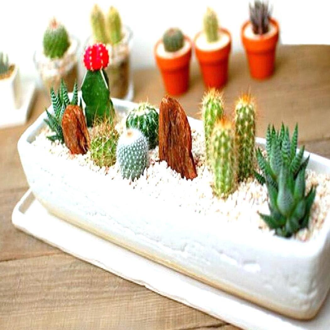 Lonlier Semillas Suculentas Cactus 20 pcs Bonsai Mini Semillas para Jardín Huerto