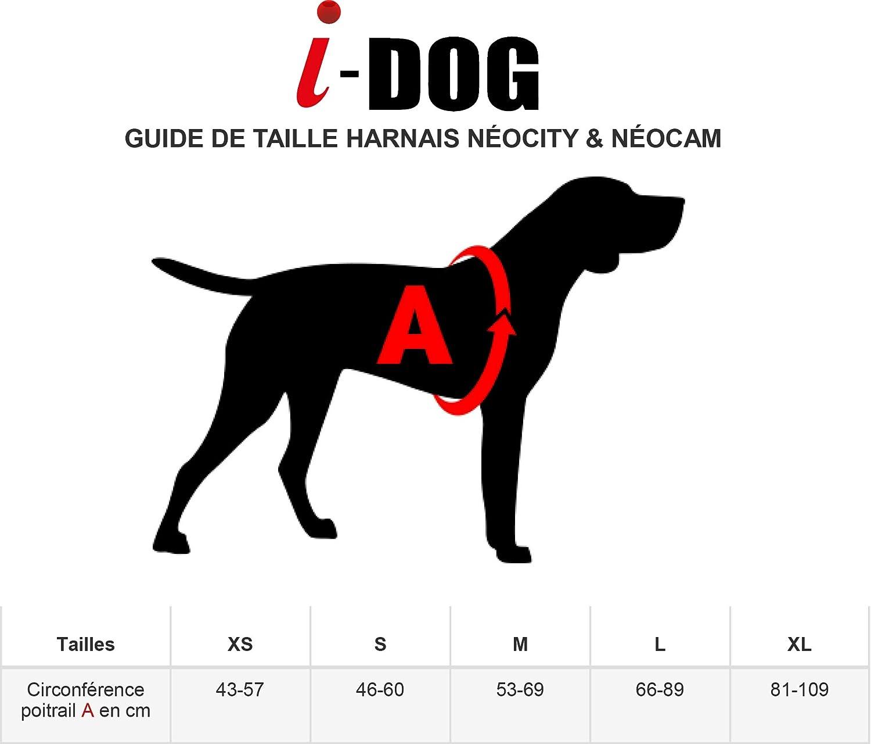 2 Coloris I-dog Harnais NEOCAM en N/éopr/ène pour Chien avec Support cam/éra Universel S, Bleu