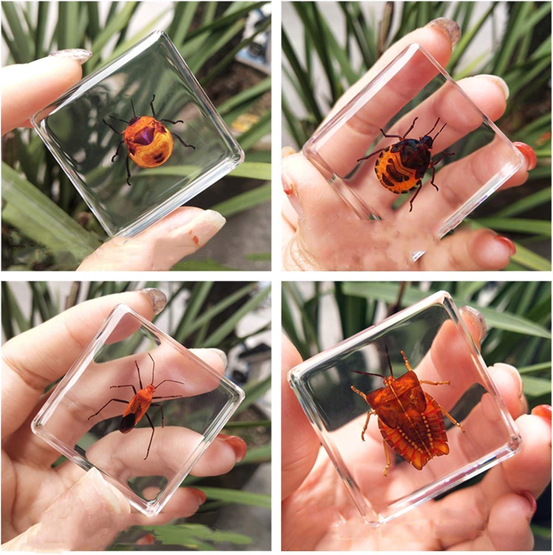 Espécimen de Insecto Juguete de observación de Escorpión Araña Escarabajo Resina de Insectos Juego de 4 Piezas Enseñanza de jardín de Infantes Insectos Reales Resina Adornos pequeños creativos