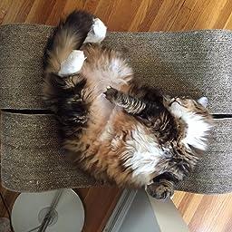 Amazon Com Customer Reviews Petfusion Cat Scratcher Lounge Walnut Brown 1 Level Pf Cl1