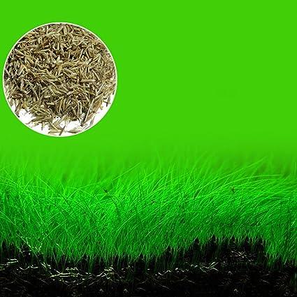 EMVANV - Planta para acuario con forma de semilla de césped para decoración de jardín,