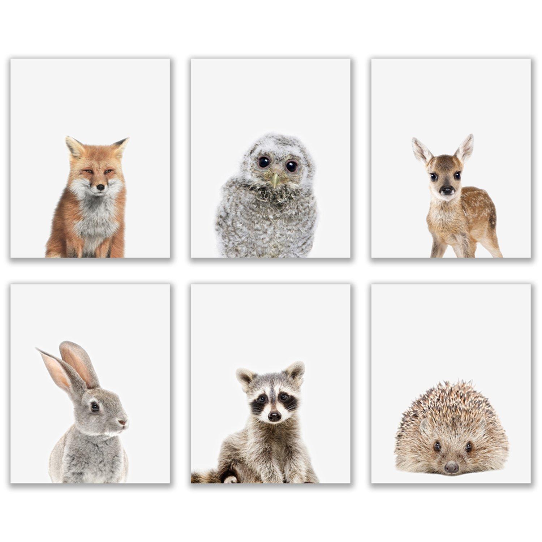 Crystal Baby Woodland Animals Poster Prints - Set of 6 (8x10) Adorable Furry North American Portraits Wall Art Nursery Decor - Owl - Deer - Bunny - Raccoon - Hedgehog - Fox
