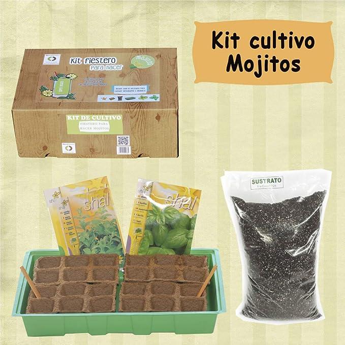 Kit de cultivo versión MOJITO: Amazon.es: Jardín