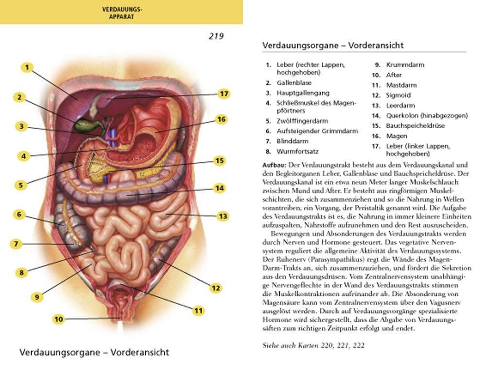Ungewöhnlich Löcher Menschliche Anatomie Und Physiologie 12. Ausgabe ...