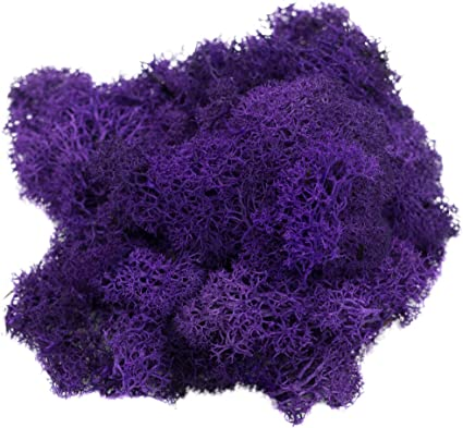 or Any Craft or Floral Project | | Plus Free Nautical Ebook by Joseph Rains Reindeer Moss Preserved 4 Ounces Terrariums for Fairy Gardens Orange Moss